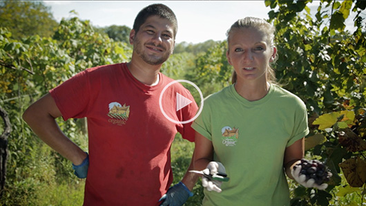 Wegmans Organic Farm Grapes