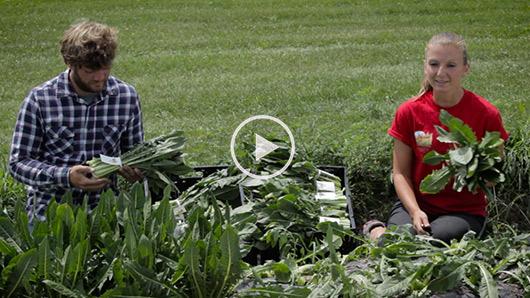 Wegmans Organic Farm Dandelion Greens