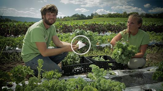 Wegmans Organic Farm Kale