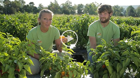 Wegmans Organic Farm Peppers